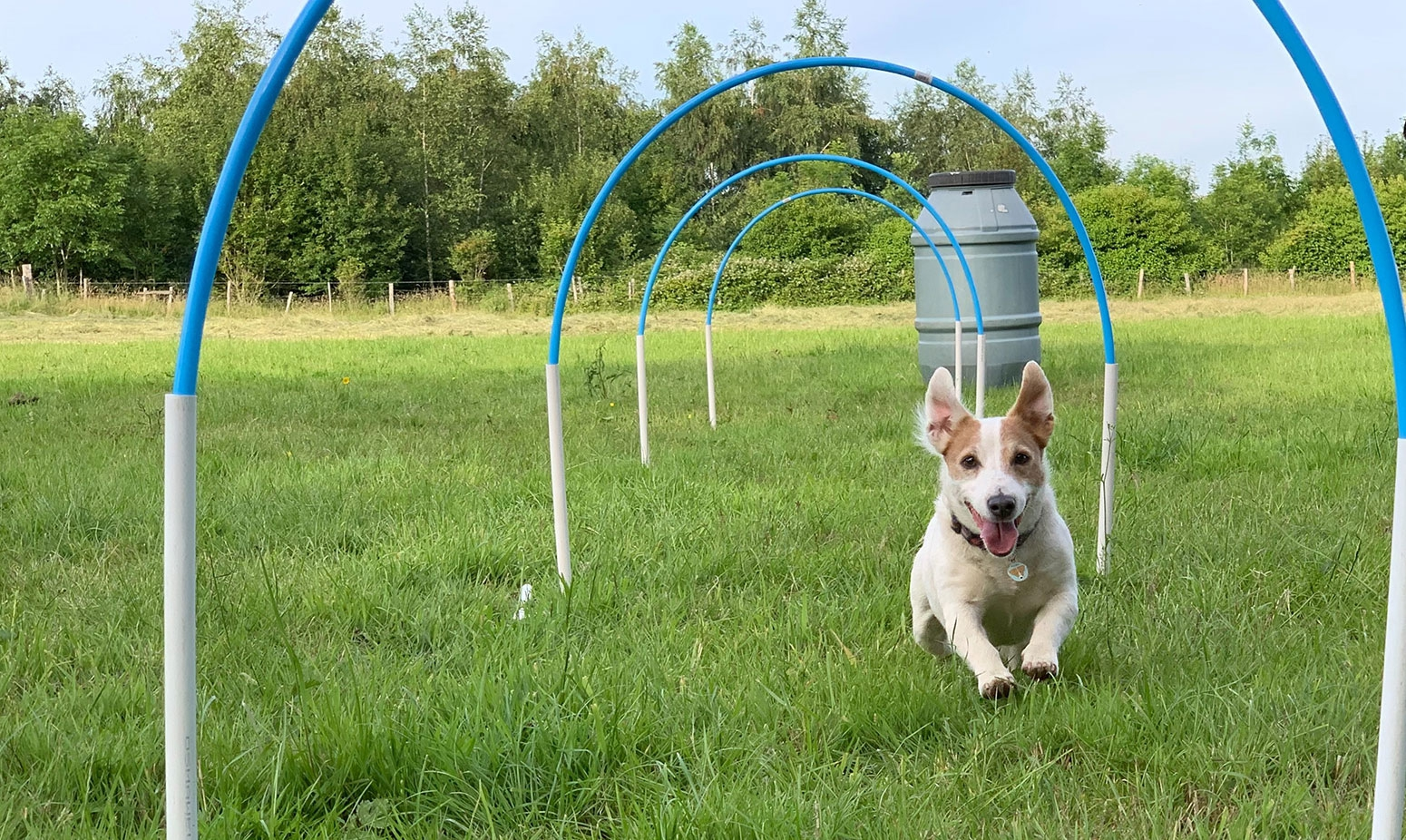 Are you a dog owner? Would you like to try hoopers?